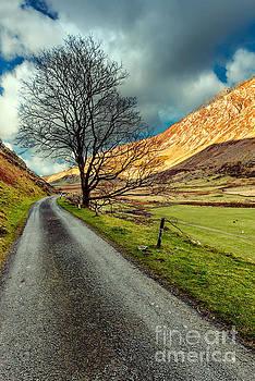 Adrian Evans - Long Road Home
