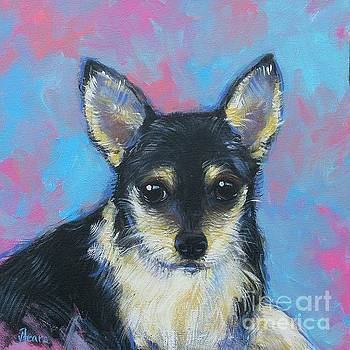 Longhair Chihuahua by Vickie Fears