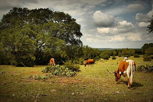Longhorns of Texas by Linda Unger