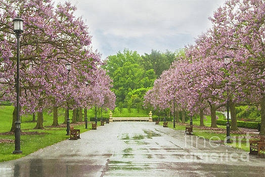 Longwood's Grand Allee by Marilyn Cornwell