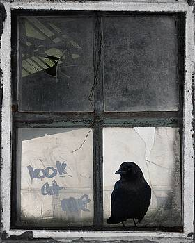 Look At Crow by Gothicrow Images