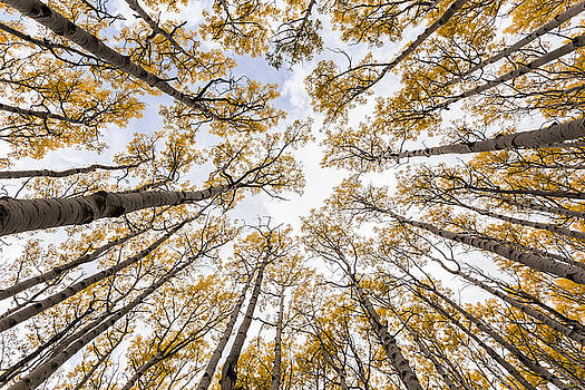 Look Up by Bill Cantey