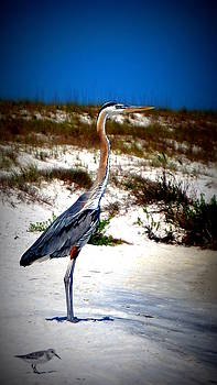 Looking out over the gulf by Laurie Pike