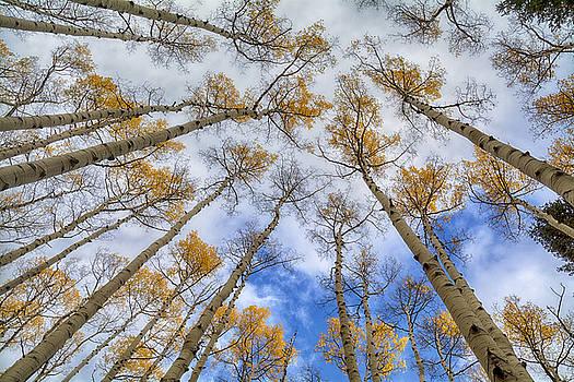 Saija  Lehtonen - Looking Up At the Tree Tops