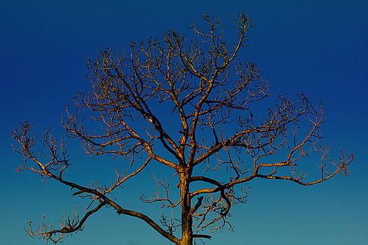 Looking Up, sunrise, Myakka State Forest by John Myers