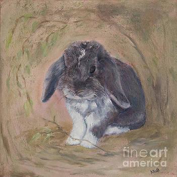 Lop Eared Rabbit- Socks by Kathryn Bell