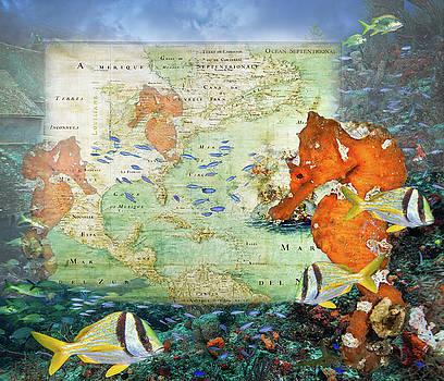 Debra and Dave Vanderlaan - Lost City Vintage Reef Map
