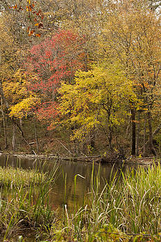 Lost Creek Autumn by Katherine Worley