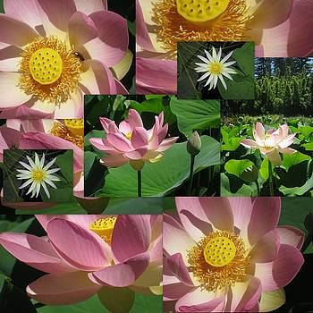Lotus and Lily Art by Cathy Jacobs