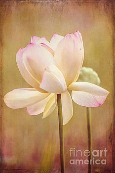 Lotus Bloom Art by Joan McCool