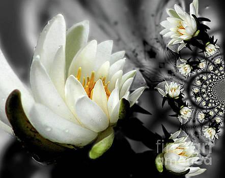 Lotus Blossom Abstract by Smilin Eyes  Treasures