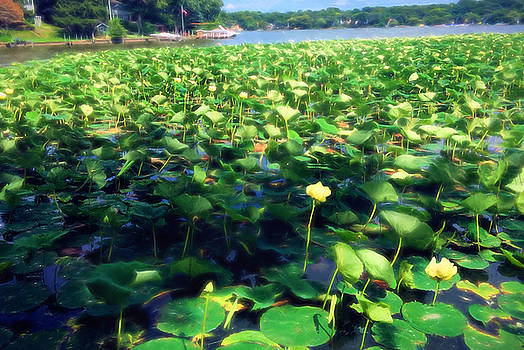 Lotus Blossoms in Bloom by Cindy Boyd
