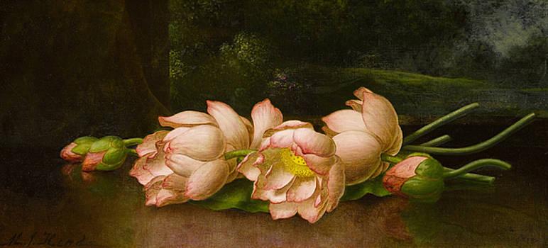Lotus Flowers  by Martin Johnson Heade
