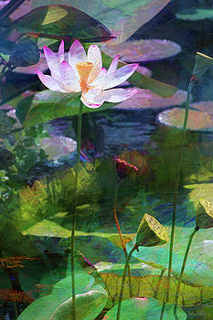 Lotus by John Rivera
