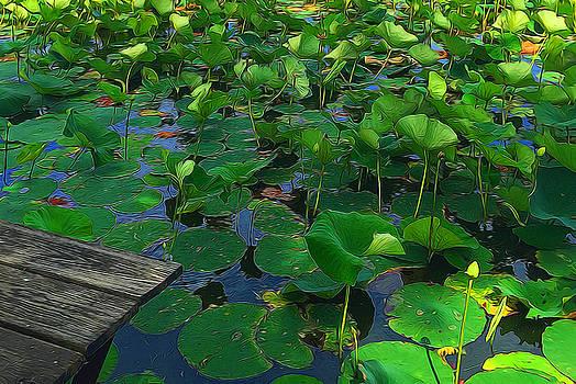Lotus Pads Preparing To Bloom by Cindy Boyd