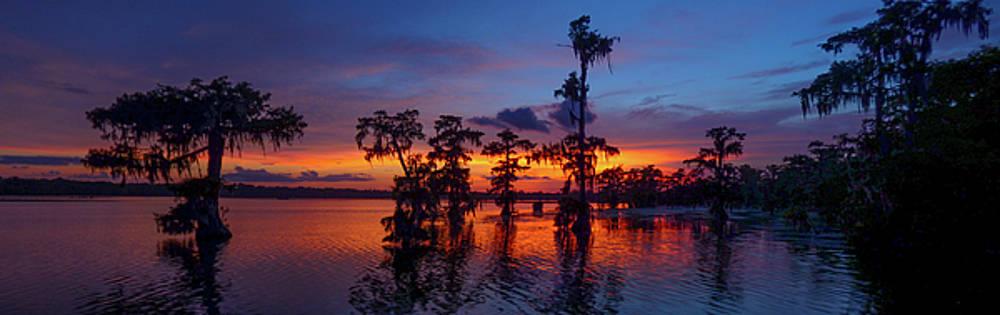 Louisiana Blue Salute by Kimo Fernandez