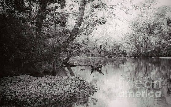 Louisiana Swamp - Vintage BW by Kathleen K Parker