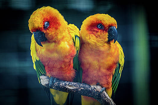 Love Birds by Chris Lord