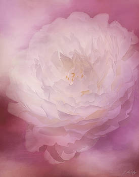 Love Comes Softly - Flower Art by Jordan Blackstone