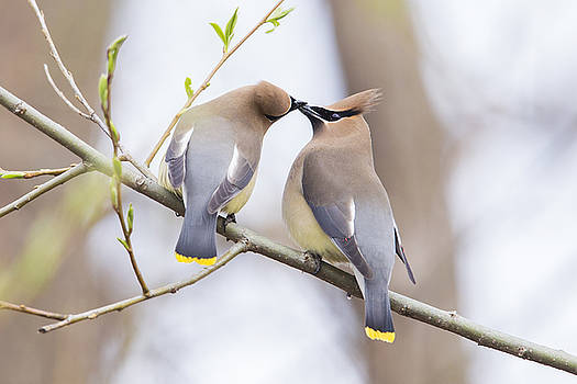 Love is in the air by Mircea Costina Photography