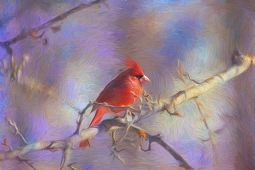 Lovely Cardinal  by Daphne Sampson