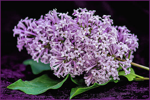 Lovely Lilacs by Cathy Kovarik