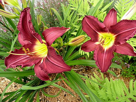 Kate Gallagher - Lovely Lilies
