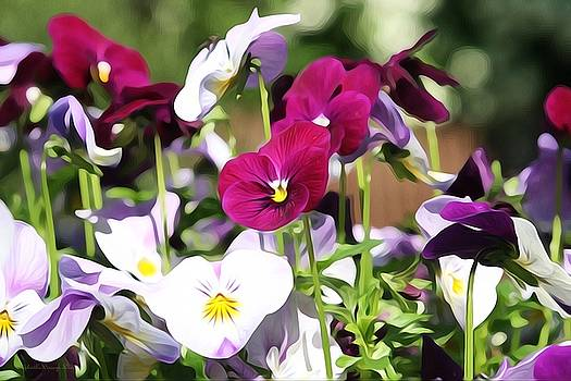 Lovely Pansies  by Gabriella Weninger - David