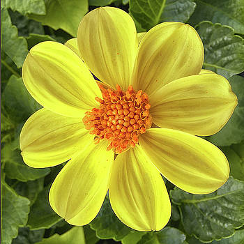 Lovely Yellow by Maggie Magee Molino
