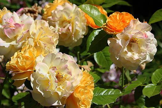 Rosanne Jordan - Loving Summer Roses