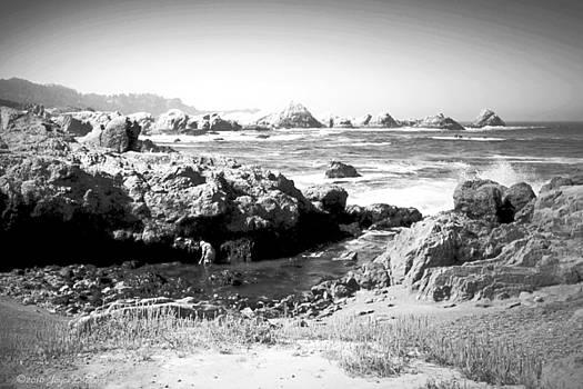 Joyce Dickens - Low Tide At Point Lobos