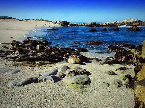 Joyce Dickens - Low Tide In Pacific Grove, CA