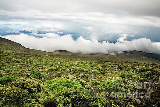 Charmian Vistaunet - Lower Slopes of Haleakala