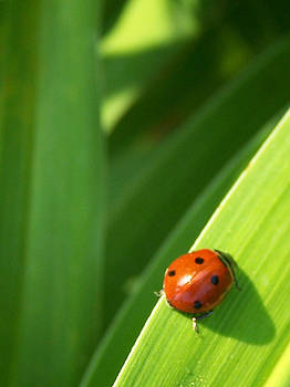 Lucky Ladybug by Sandy Collier