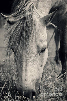 Lulu the Welsh Pony bw by Angela Doelling AD DESIGN Photo and PhotoArt
