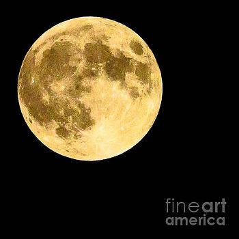 Lunar Close Up by Sandy Molinaro