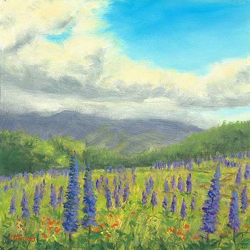 Lupine at Mountains, Sugar Hill, NH by Elaine Farmer