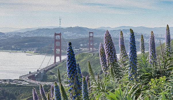 Lupine hillside Golden Gate Bridge by Mark Chandler