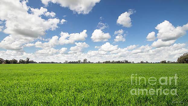 Lush Green Fields by Linda Lees