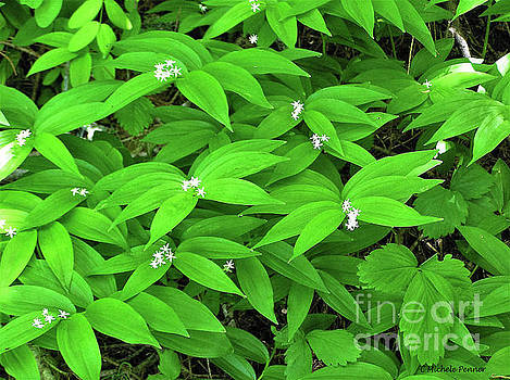 Lush Leaves by Michele Penner