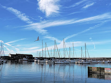 Lyme Regis Harbour - July Morning by Susie Peek