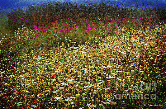 Lythrum and Queen Anne's Lace by Yuri Lev