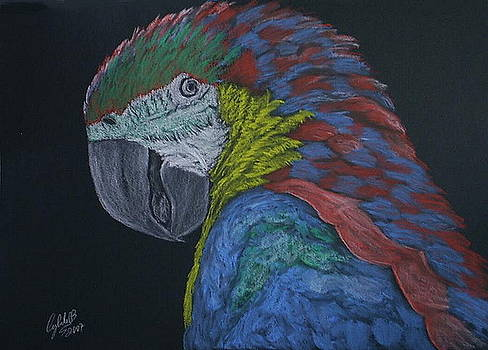 Macaw by Cybele Chaves