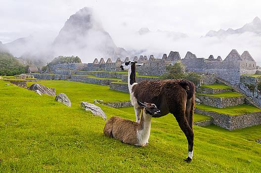 Machu Pichu by Kobby Dagan