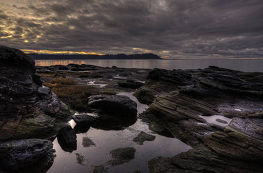Madrona Evening 2 by Randy Hall