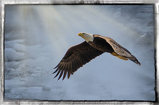 Magestic Flight by Shirley Tinkham