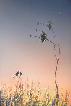 Magic Hour  by Richard Piper