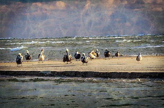 Magic Mystic Pelicans by Crissy Anderson