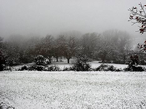 Magic Winter by Donatella Muggianu