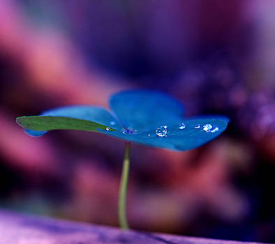 Magical blu flower by Nataly Rubeo